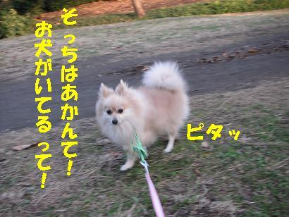 c0179136_002710.jpg