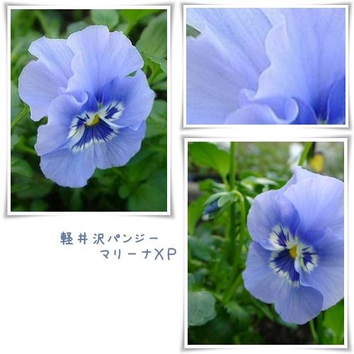 a0079880_19111650.jpg
