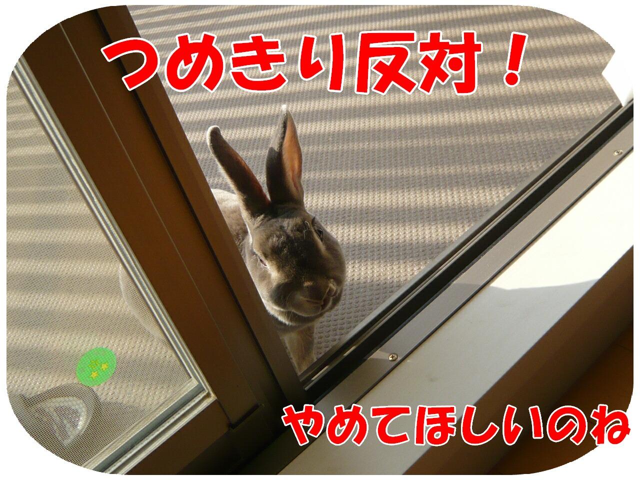 c0151439_1412932.jpg