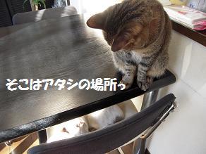 c0139488_1746463.jpg