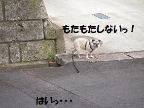 c0139488_17491251.jpg