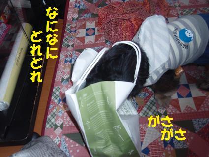 c0151866_2095266.jpg
