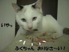 c0139488_14405385.jpg