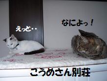 c0139488_1440851.jpg