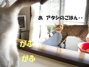 c0139488_1591658.jpg