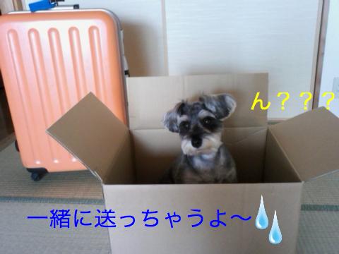 c0177261_12485316.jpg