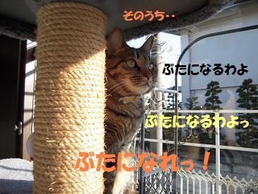 c0139488_15495270.jpg