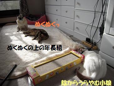 c0139488_1602744.jpg
