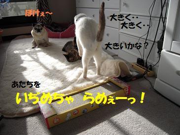 c0139488_1604697.jpg