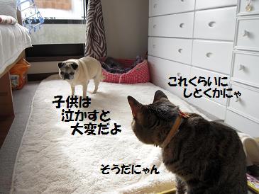 c0139488_1612277.jpg