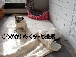c0139488_1621747.jpg