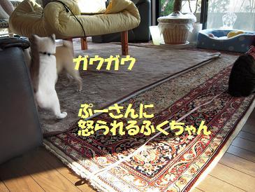c0139488_2313282.jpg