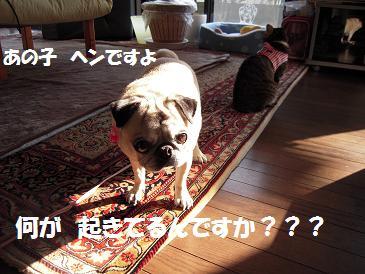c0139488_2321751.jpg