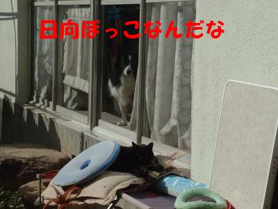 c0120585_20485420.jpg