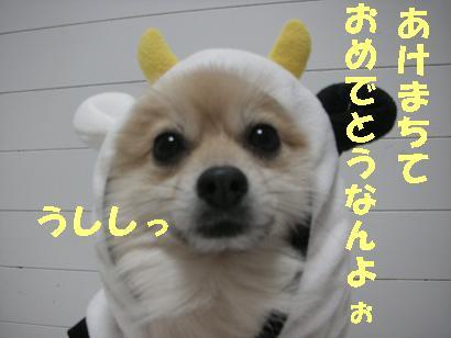 c0179136_0425179.jpg