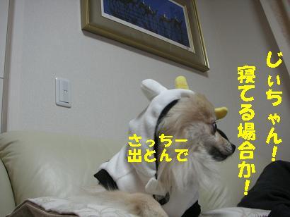 c0179136_313378.jpg