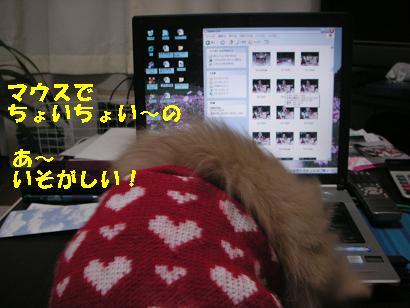 c0179136_315038.jpg