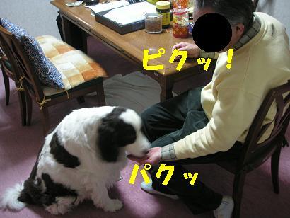 c0179136_245158.jpg