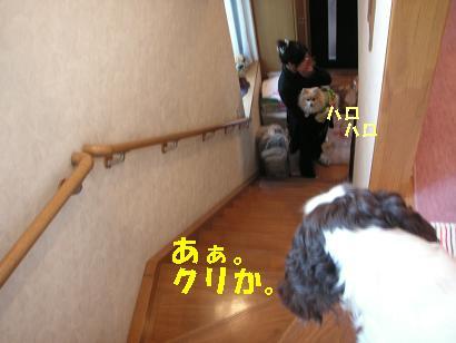 c0179136_24884.jpg
