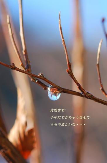 c0124876_1654141.jpg