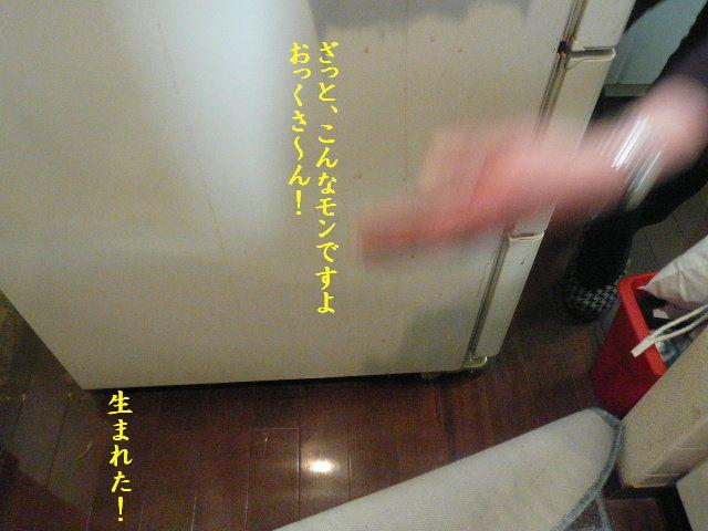 e0094407_2049479.jpg