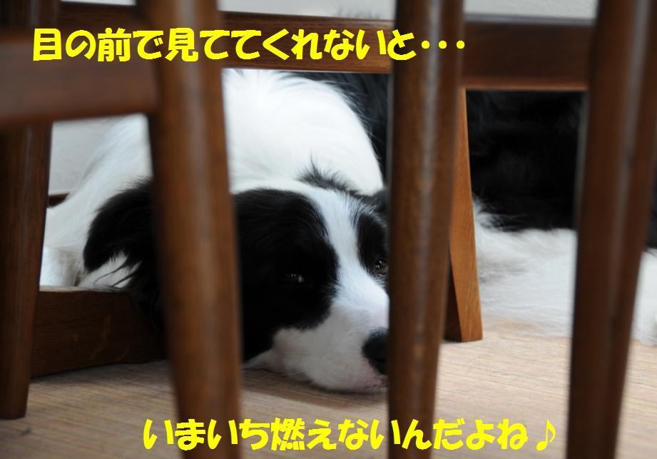 c0147241_19223884.jpg