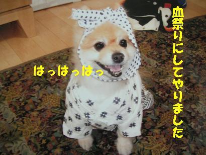 c0179136_252115.jpg