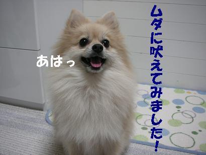 c0179136_2521577.jpg