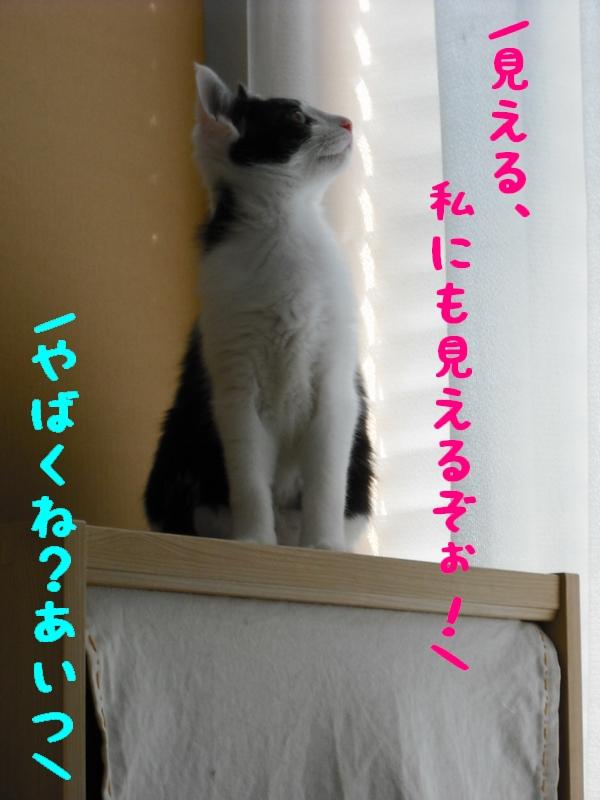 c0181639_050828.jpg