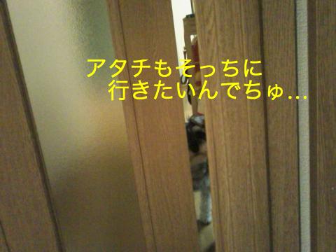 c0177261_21575518.jpg