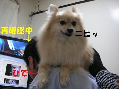 c0179136_318149.jpg