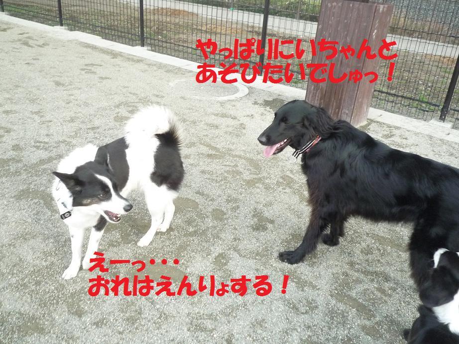 a0104464_12205492.jpg