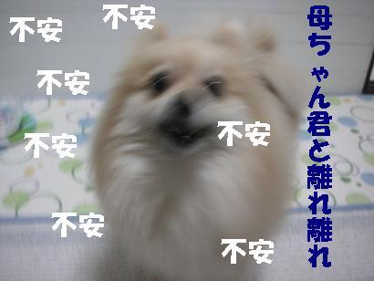 c0179136_226465.jpg