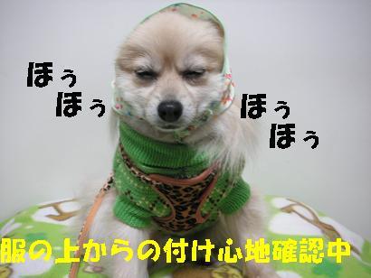 c0179136_14393080.jpg