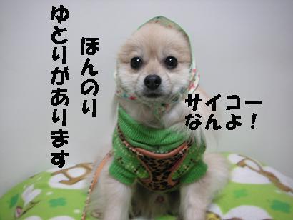 c0179136_14393536.jpg