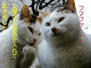 c0042941_0391225.jpg