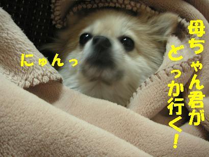 c0179136_2513280.jpg