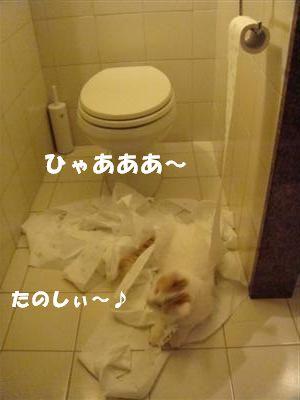 c0195250_346946.jpg