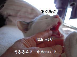 c0139488_13403492.jpg