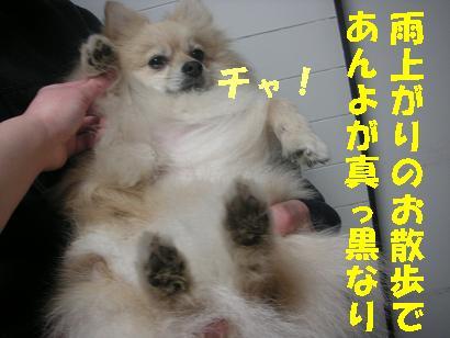 c0179136_3205559.jpg