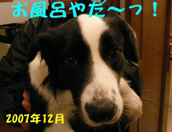 a0100564_19224926.jpg