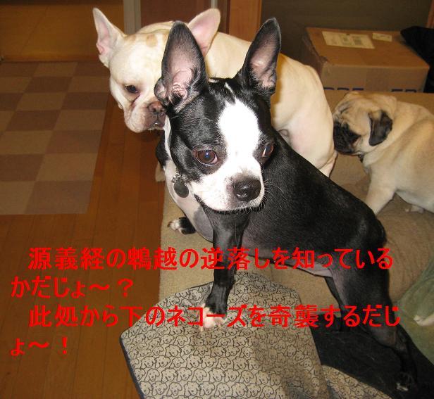 c0132537_12404577.jpg