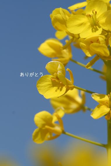 c0084097_14554.jpg