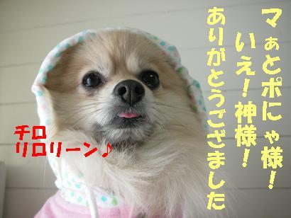 c0179136_15293161.jpg