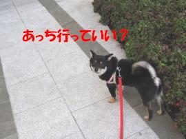 c0185516_128078.jpg