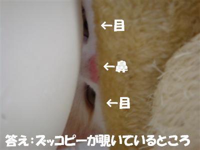c0195250_1995257.jpg