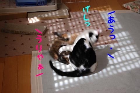 c0181639_058960.jpg