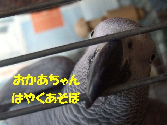 c0133013_848668.jpg