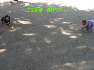 c0058727_20104723.jpg