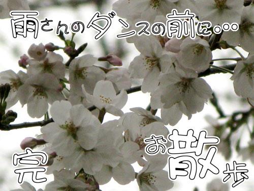c0011204_1312144.jpg